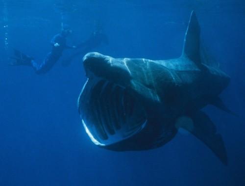 basking-shark-660x501-custom.jpg