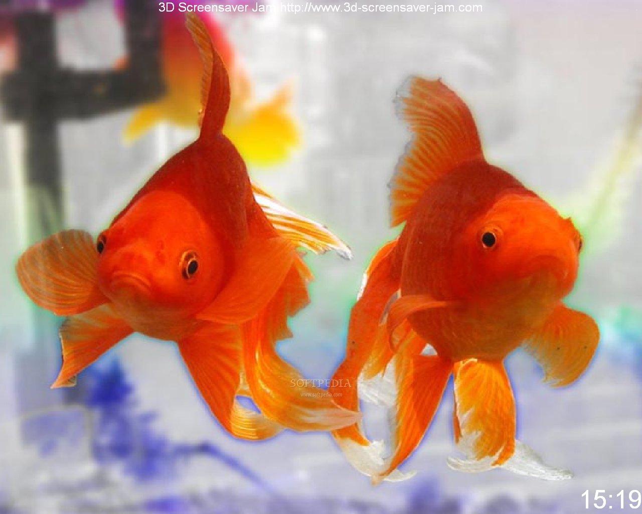 evil goldfish cartoon. free goldfish pictures